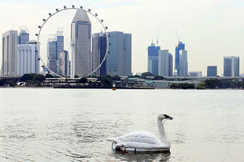 Singapore uses robot swans to monitor water quality in reservoirs